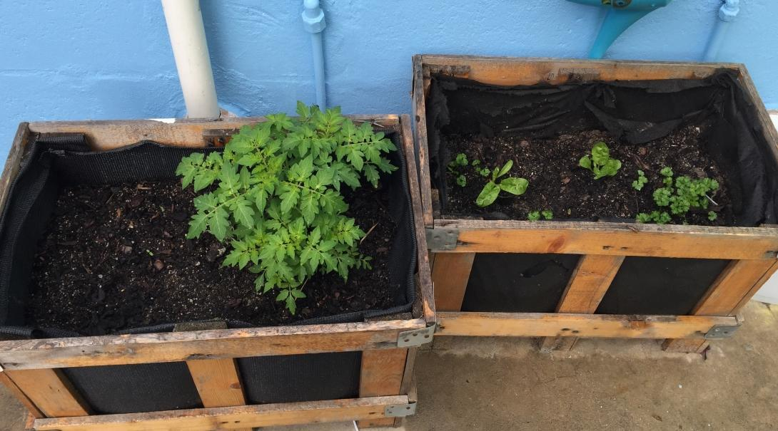 Pictured is a small vegetable garden planted by Projects Abroad interns during their nutrition internship in South Africa.